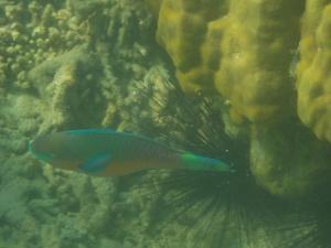 Snorkeleando en Kapas